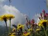 wiesenblumen-vor-langkofel